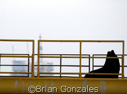 Bull on Oil Rig by Brian Gonzales 